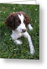 Spinger Spaniel Pup Greeting Card