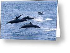 Spinner Dolphins Greeting Card