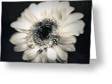 Spinner Greeting Card