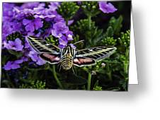 Spinx Moth Greeting Card