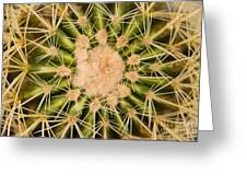 Spiny Cactus Needles Greeting Card