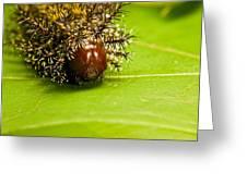Spiny Larvae Greeting Card