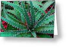 Spiral Cactus Greeting Card