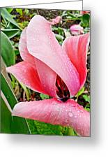 Spiral Pink Tulips Greeting Card
