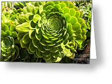 Spiral Succulant Greeting Card
