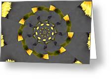 Spiraling Gerberas Greeting Card