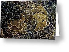 Spirals In Corals Greeting Card