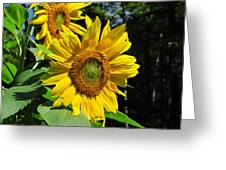 Spirals Of Sun Greeting Card