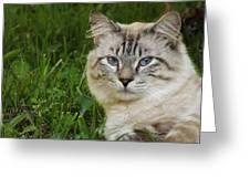 Spirit Cat Greeting Card