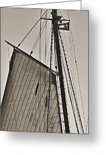 Spirit Of South Carolina Schooner Sailboat Sail Greeting Card
