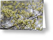Spirit Of The Dogwood Greeting Card