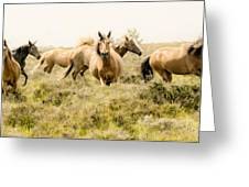 Spirit Of The Horse Greeting Card