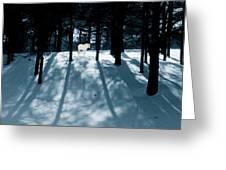 Spirit Pony In A Shadowed Wood Greeting Card