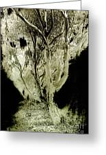 Spirit Tree Greeting Card by Paul W Faust -  Impressions of Light