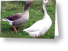 Spirited Geese Greeting Card