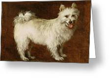 Spitz Dog Greeting Card
