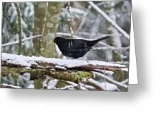 Splash. Eurasian Blackbird Greeting Card