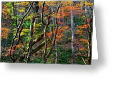 Splash Of Autumn Greeting Card by Brad Brizek