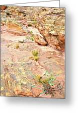 Splash Of Color In Valley Of Fire's Wash 3 Greeting Card