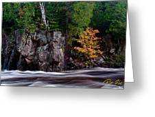 Splash Of Fall Color Greeting Card