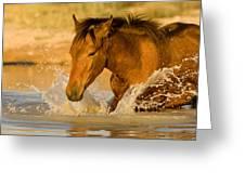 Splashdown Greeting Card