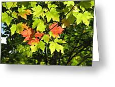 Splattered Paint Greeting Card