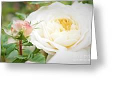 Splended Roses Greeting Card