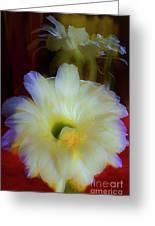 Splendid  Flower Of Cactus. Greeting Card