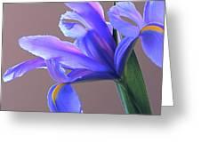 Splendid Iris Greeting Card