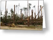 Splintered Trees Greeting Card