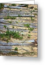 Splinters In The Sand Greeting Card
