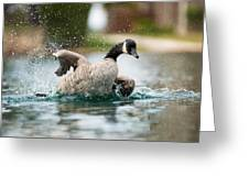 Splish Splash Greeting Card