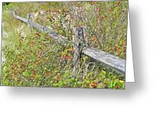 Split Rail Fence And Poison Ivy Greeting Card