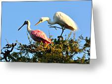 Spoonbill And Egret Greeting Card