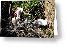 Spoonbill Family Greeting Card