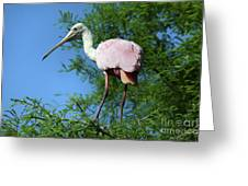 Spoonbill In A Tree Greeting Card