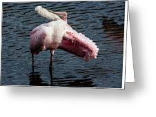 Spoonbill Preening Contortions Greeting Card