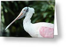 Spoonbill Profile Greeting Card