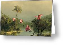 Spoonbills In The Mist Greeting Card