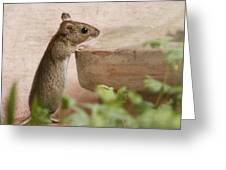 Sports Mouse Greeting Card