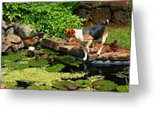 Sporty At The Lily Pond Greeting Card