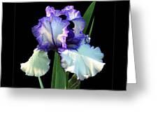 Spotlight On 'freedom Song' Bearded Iris Greeting Card