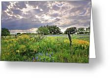 Spotlight On Spring Greeting Card