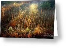 Spotlight On The Marsh Greeting Card