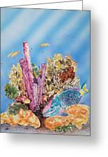 Spotlight Parrotfish Greeting Card