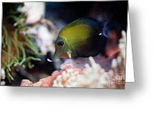 Spotted Aquarium One Fish Greeting Card