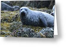 Spotted Coat Of A Harbor Seal Greeting Card