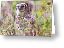Spotted Eagle Owl  Greeting Card