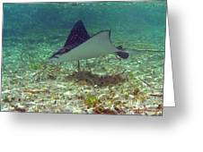 Spotted Eagle Ray Greeting Card
