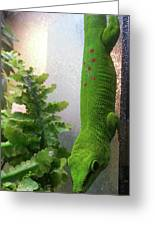 Spotted Gecko Greeting Card